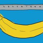 طول الذكر الطبيعي بالصور (علميا)