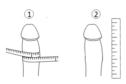 قياس القضيب