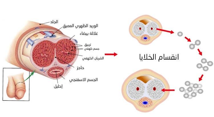 انقسام خلايا